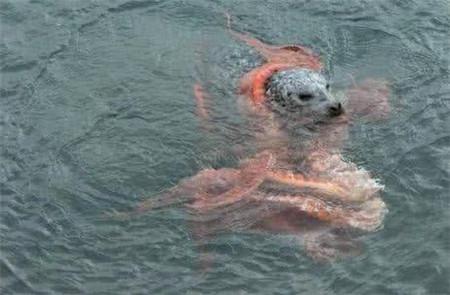 男子海里发现一团黑影,以为是小狗溺水,走近一瞧撒腿就跑
